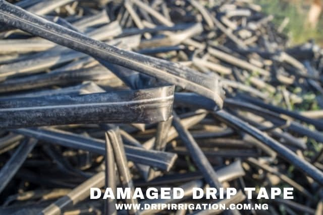damaged drip tapes